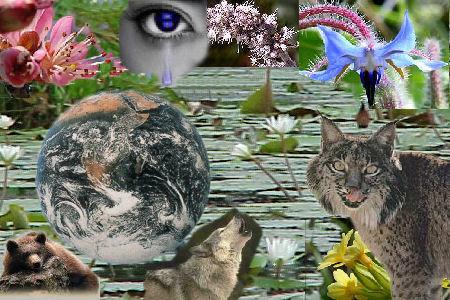 http://www.webmujeractual.com/wp-content/uploads/2008/12/biodiversidad3auno7.jpg