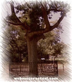El Guernica - Arenys de Munt - Parque Cal Jalpí